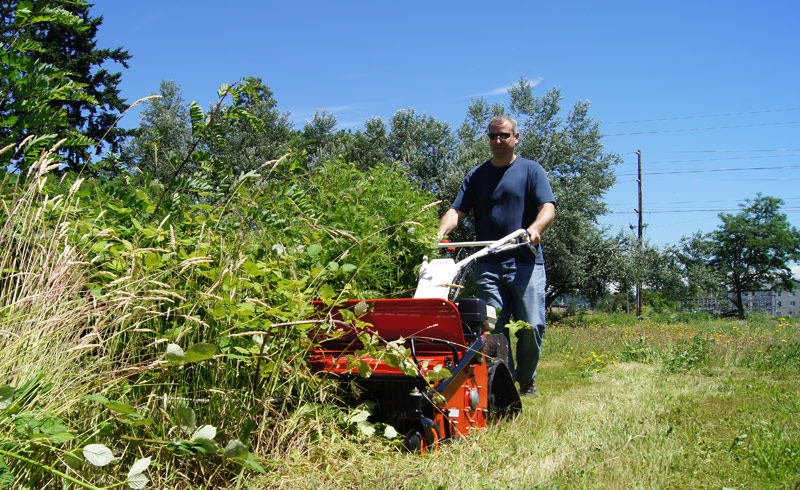 The Best Brush Cutter To Remove Goldenrod Orec
