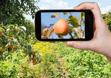 Garden Ideas from your Smart Phone