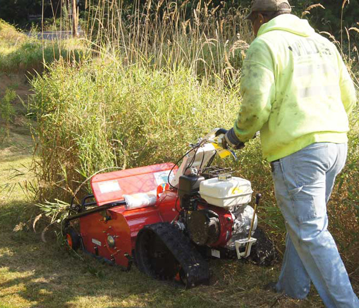 The Best Brush Cutter To Remove Goldenrod Orec America