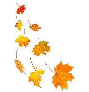 We loves those red and gold leaves until they hit the ground. Then its time to mulch leaves!